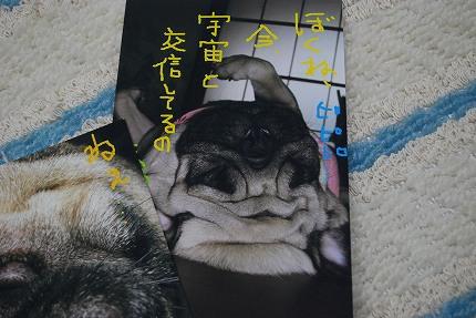 くろまめちゃんから♪ (4).jpg