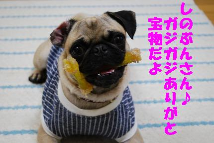 しのぶんガジガジ (5).jpg