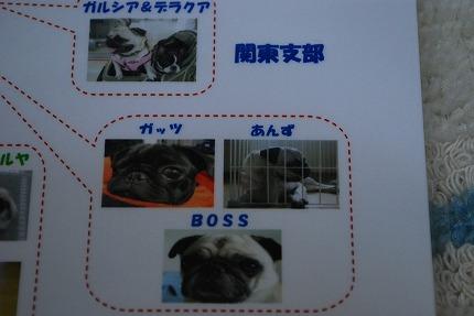 ぺちゃっと通信 (3).jpg