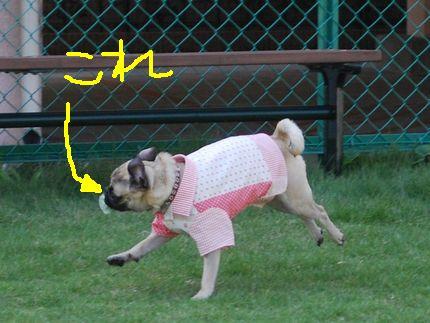 スイッチ (3).jpg