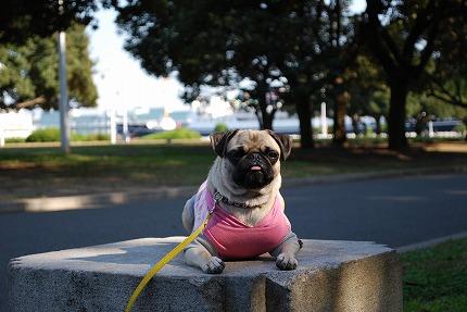 横浜散歩 (6).jpg